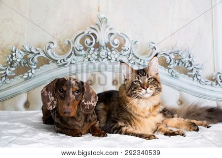 poster of cat and dog