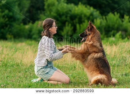 poster of Pretty Brunette Woman Playing With German Shepherd Dog On The Grass In Park. Dog Sitting Give A Paw