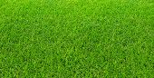 Green Grass Texture For Background. Green Lawn Pattern And Texture Background. Close-up. poster