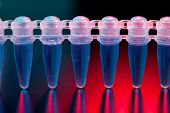 pic of dna fingerprinting  - Cell cultures in micro tubes - JPG
