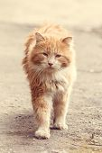 Stray Street Red Cat. Homeless Cat. A Homeless Animal. Cat On The Street poster