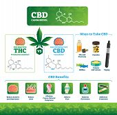 Cbd Vector Illustration. Labeled Medical Thc Cannabis Benefits Infographics. Psychoactive And Health poster