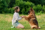 Pretty Brunette Woman Playing With German Shepherd Dog On The Grass In Park. Dog Sitting Give A Paw  poster