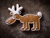 pic of cariboo  - Gingerbread reindeer - JPG