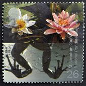A stamp shows Frog's Legs and Water Lilies (National Pondlife Centre Merseyside)