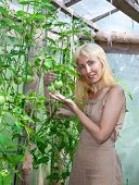 The young attractive woman in a hothouse rejoices to the future crop of tomatoes