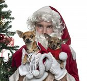 Close-up of Santa Claus holding two lapdogs, isolated on white poster