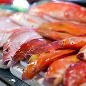 stock photo of red snapper  - Lapu - JPG