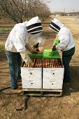 pic of honey bee hive  - Genuine Unidentifiable Bee Keepers inspect their Bee Hives and their Bees to make sure they are healthy and doing their job of pollinating plants and making honey - JPG