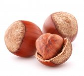 stock photo of cobnuts  - hazelnut or filbert nut isolated on white background cutout - JPG