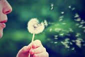 stock photo of pollen  - a girl blowing on a dandelion done with a vintage retro instagram filter - JPG