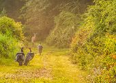 stock photo of gobbler  - Whitetail deer does and turkeys standing in a nature trail - JPG