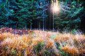 pic of redwood forest  - Beautiful autumn forest in green and orange tone - JPG