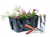stock photo of hand tools  - Plastic flower box with fresh flowers and gardening hand tools shot on white background - JPG