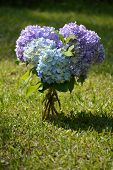 picture of hydrangea  - Purple blue and white hydrangeas in clear glass vase sitting on a lush green grass lawn - JPG