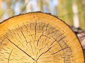 picture of section  - Background of sliced tree trunk - JPG