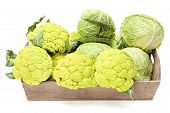 stock photo of cruciferous  - Cauliflower and Cabbage inside wooden box isolated on a white background - JPG