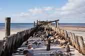 picture of jetties  - Old wooden jetty on the background of the Baltic sea - JPG