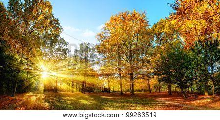 Sunny Autumn Scenery In An Idyllic Park