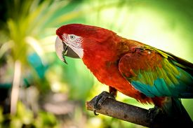 foto of green-winged macaw  - Red and green macaw perched on a branch - JPG
