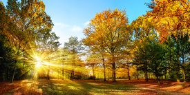 picture of glorious  - Scenic autumn panorama with the sun shining through the gold foliage and illumining the forest landscape - JPG