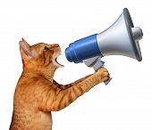 Cat Announcement poster