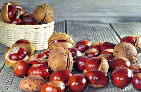 picture of chestnut horse  - Photo of horse chestnut on a wooden table - JPG