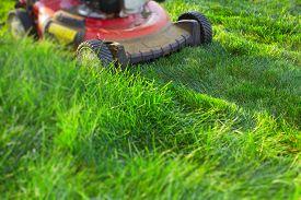 image of grass-cutter  - Lawn mower cutting green grass - JPG
