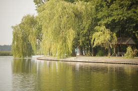 stock photo of weeping  - view from lake at lakeside promenade with weeping willow tree - JPG