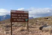 stock photo of burro  - Sign warning of wild horses and burros on highway - JPG