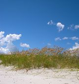 stock photo of jekyll  - A coastal - JPG