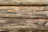 Pine Logs. Log Wall Texture Of Natural Pine Logs. Brown Natural Wood Texture. poster