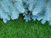 Branches Of Blue Fir Tree. Blue Spruce, Picea Pungens. Selective Focus. Christmas Background With Be poster