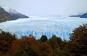 Awesome View Of The Fall Foliage Against Perito Moreno Glacier In Los Glaciares National Park, El Ca poster