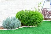 Landscaped Format, Yard With Garden Design.young Green Fresh Bushes Near The House, Front Yard. Land poster
