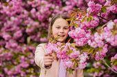 Kid On Pink Flowers Sakura Tree Background. Allergy Remedy. Child Enjoy Life Without Allergy. Sniffi poster