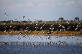 image of marshlands  - View of a flock of birds flying on the marshlands - JPG