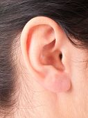 picture of close-up  - shape of the ear repeats figure the baby in the womb - JPG