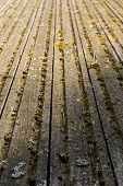 Boards Covered With Moss. Picturesque Old Wooden Surface. Texture Of Old Boards. poster