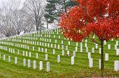 stock photo of arlington cemetery  - Arlington National Cemetery near to Washington DC - JPG