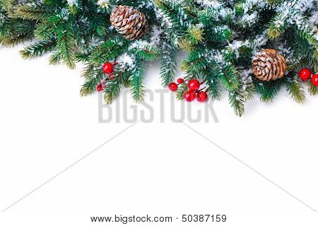 Fir Tree Branch Isolated On White poster