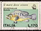 ITALY - CIRCA 1978: a stamp printed in Italy shows image of Dusky Grouper  (Epinephelus marginatus o