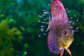 pic of saltwater fish  - Colorful tropical fish - JPG
