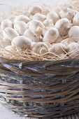 picture of agaricus  - A close up photo of a edible mushrooms known as Agaricus in a basket on a bright solid background - JPG