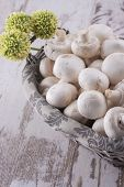 stock photo of agaricus  - A close up photo of a edible mushrooms known as Agaricus in a basket on a bright solid background - JPG