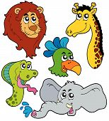 Zoo Animals Collection poster