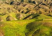 Beautiful green rolling hills of Southern New Zealand at dusk, Lindis Pass, Otago Region