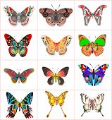 foto of flying-insect  - Illustration set insect butterflies on a white background - JPG