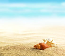 image of starfish  - Shells and starfish on sandy beach - JPG
