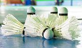 stock photo of shuttlecock  - Used Shuttlecocks on the floor in badminton club - JPG